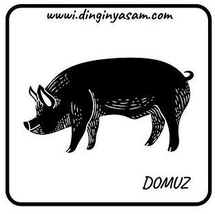 cin astrolojisi domuz