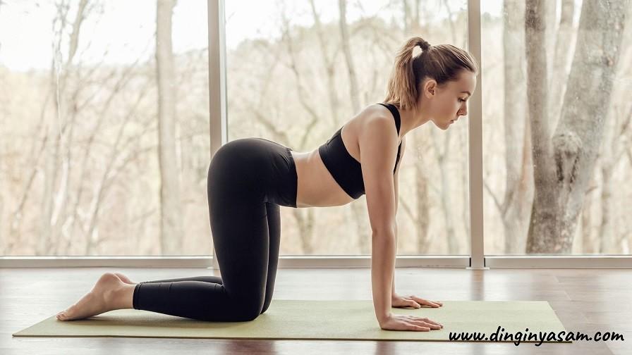 yoga inek pozu Bitilasana dinginyasam.com